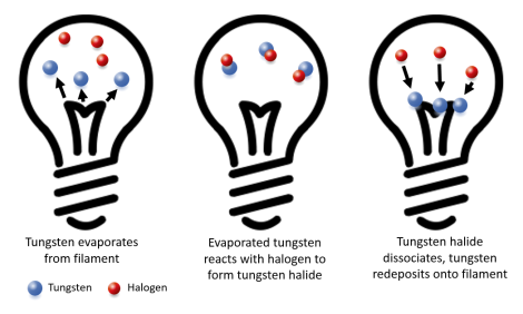 Halogen cycle